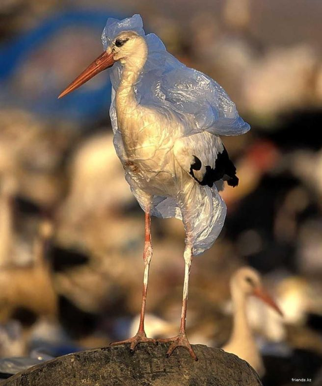 stork with plastic bag